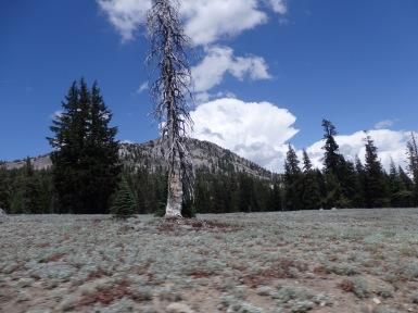 Dead tree all by itself