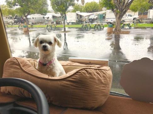 A Rainy Day in San Diego